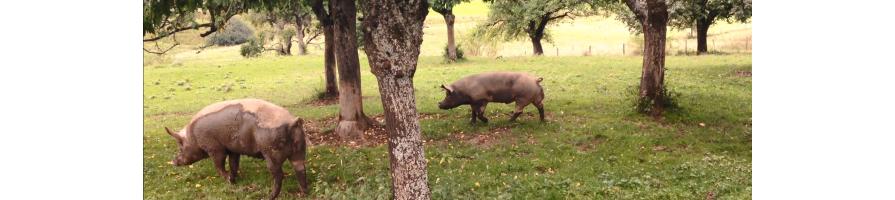 Bestes BIO Fleisch der Natursprung-Bauern online bestellen
